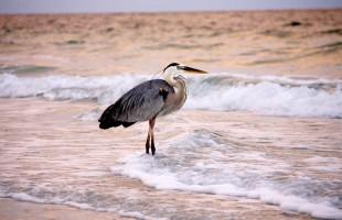 bird-1202018_1280